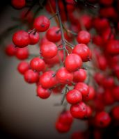Berries 2-29-12 by Tailgun2009