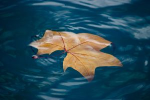 Leaf on the Water Wallpaper by Noemy009
