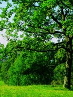 So green by SmokingSoul