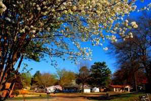 01- Spring in my Street by JoeCorreia