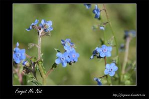 Forget Me Not by Jorgemme