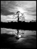 BW Lone tree II by studio7designs