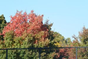 2014 Natural Autumn Color 29 by Miss-Tbones