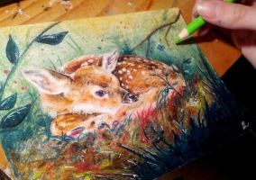 Fawn colored pencil practice by superturtlethefirst