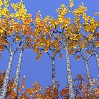 Birch Grove by curious3d