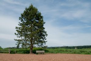 Tree and Bench in Clearing by happeningstock