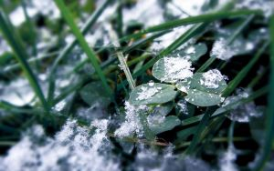 The touch of Jack Frost. by ShcheglinaT