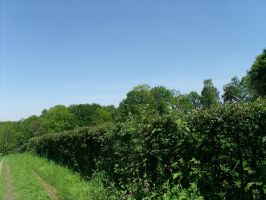 A hedge by BMFMhero1991