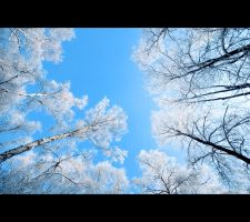Winter Trees by Reggaemanyo