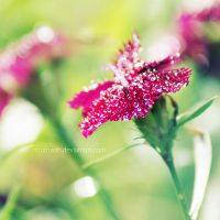 Garden jewels by nhuthanh
