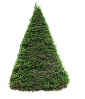 spruce png by Amalus