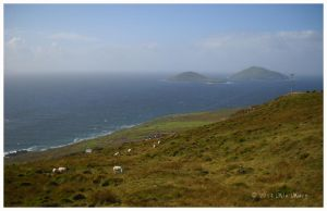 Ireland - Ring of Kerry Sheep by appleshampooch