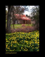 Daffodil Barn by kayaksailor