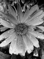 Flowers gathering of rain by silent-sarah05