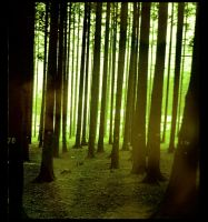 mark the trees by earthlab