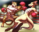 Boxing Match by RickGriffin