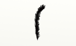 Feather by KuninGroup