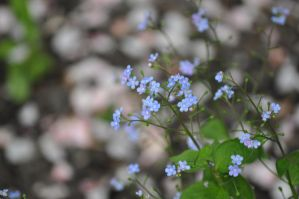 Tiny Blue Petals by LoverOfEveryone3133