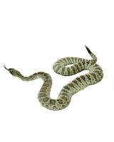 SNAKE PNG 2 by Moonglowlilly