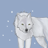 Arctic Wolf by coolsarahkry
