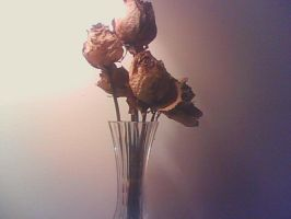 Dried Roses by mrslovettrules