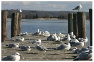 Seagulls on a dock by jwstarbuck09