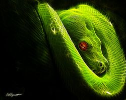 Green Tree Python by Lolly1123