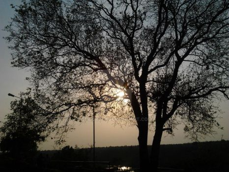 Tree + Sunset by Spider360