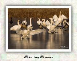 Skating Swans by Merlinstouch