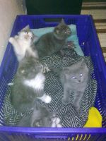 Alices Kittens by Stilith