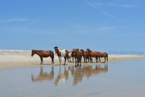 Assateague Ponies by ThePopoGirl55