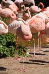 Relax Series - Flamingos by stromstoerung