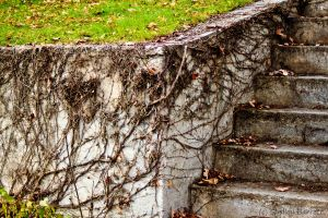Vines on Wall by dragongoddess62