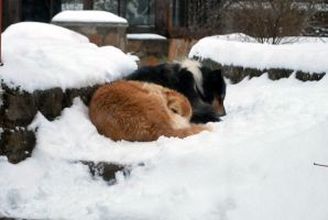Furry snowballs by Sheilagold