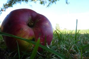 Apple in the gras by SaphiraSwirl
