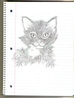 Cat Sketch by Hane-to-Yume
