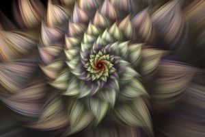 Spiral Flower for Lara by johnnybg