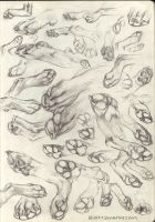 Paw Studies by kenket
