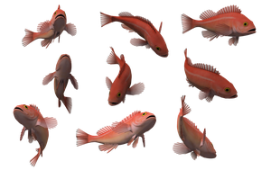 Fish Set 26 by Free-Stock-By-Wayne