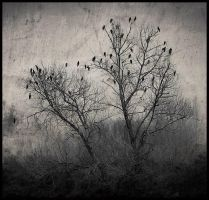 a scene with birds by only-melancholy