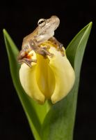Frog on a flower by AngiWallace