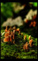 Shrooms by shuttermonkey