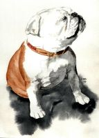 English Bulldog by RamonaQ