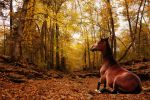 Thankful For... by horselover110