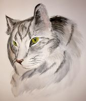 Silver Fluffy Cat by carrie-warwick