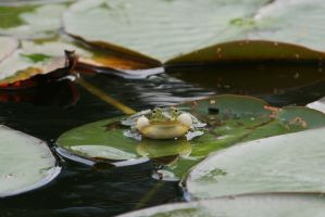 frog in castle garden by ingeline-art
