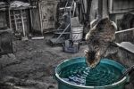 Thirsty Cat by DorianOrendain