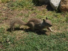 Adorable Baby Squirrel 3 by photographyflower