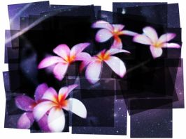 Magic Flowers by taxicabofdoom