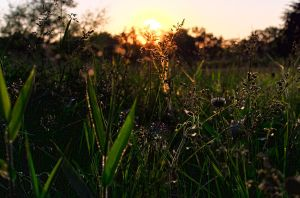 Sunset in the grass by fixer